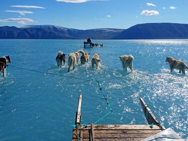 Foto: Schlittenhunde müssen auf Grönland durch Schmelzwasser waten