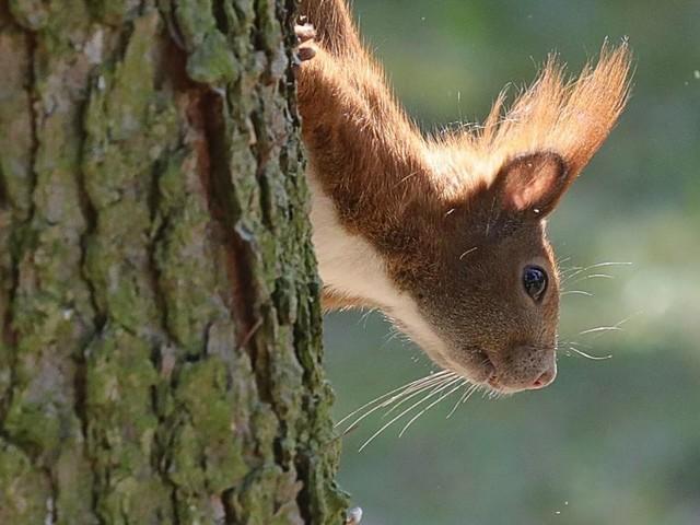 Mann fütterte Eichhörnchen in den USA mit Crystal Meth
