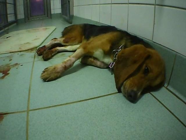 Heimliche Aufnahmen: Tierquälerei im Versuchslabor - Staatsanwaltschaft ermittelt