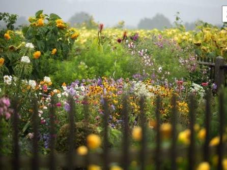 So helfen Sie der Natur: Plädoyer für mehr Unordnung im Garten