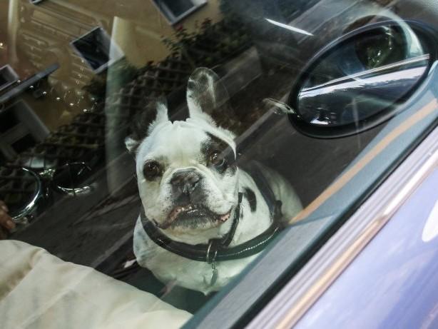 Tierschutz: In der Hitze vergessen: Polizisten retten Hund aus Auto