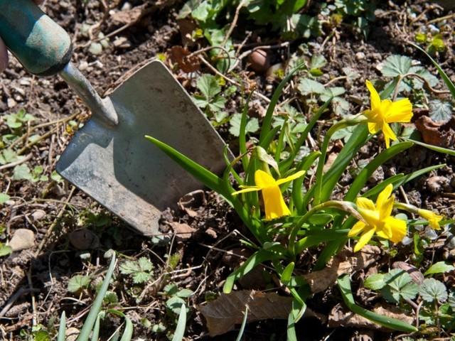 Tipps für den Garten: Raus! Jetzt!