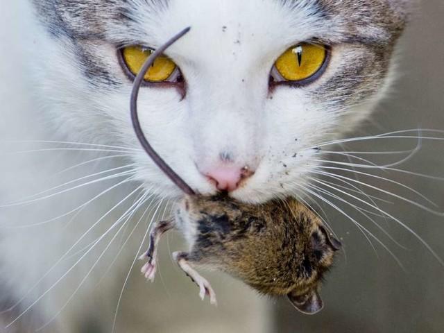 """Wenn die Katze """"Geschenke"""" mitbringt: Das steckt hinter Maus-Mitbringseln"""