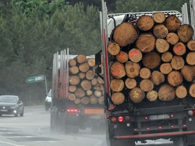 Forstwirtschaft: Teures Bauholz - Bund hält Maßnahmen für ausreichend