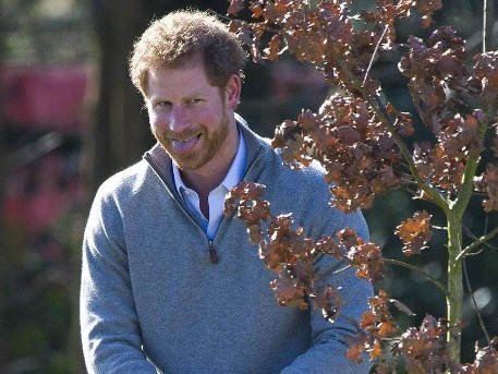Zum Schießen: Prinz Harry auf Wildjagd in Brandenburg