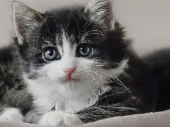 """""""Die Katzen-Kita"""" im Livestream und TV: Wie geht es in Folge 3 der Dokusoap weiter?"""