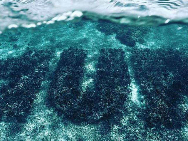 1UP taggen mit weltweit erstem Korallen-Graffiti den Meeresgrund