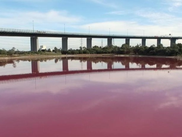 Farbe stammt von Algen: Ein See in knalligem Pink