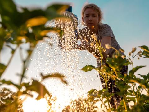 Bloß nicht am Abend! Gärtner erklärt großen Fehler beim Gießen
