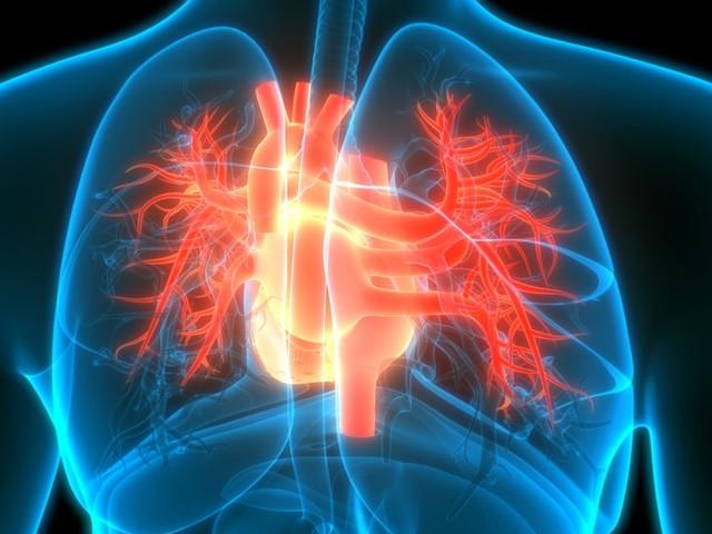 Wenn das Herz aus dem Takt gerät - Wichtige Fakten zum Vorhofflimmern