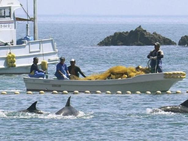 Fangquoten veröffentlicht: Japan macht wieder Jagd auf Delfine