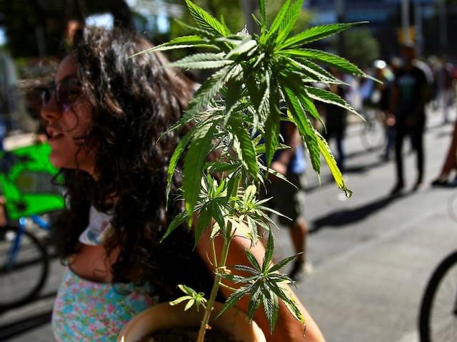 Cannabis-Legalisierung: Hoffen auf den grünen Boom in Mexiko