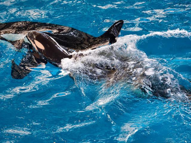 SeaWorld Entertainment streicht 350 Stellen und will in Attraktionen und Marketing investieren