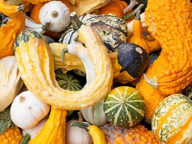 Märkte und Messen: Herbst in der Region: Hier gibt's Kürbisse und Kunsthandwerk