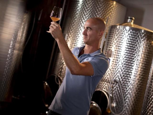 Dolce Vita: Wie man auch in Oberösterreich guten Wein anbauen kann