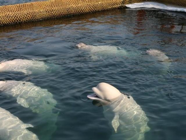 """""""Wal-Gefängnis"""" in Russland: 100 Tiere in winzigen Becken eingesperrt"""