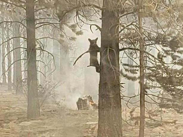 Brände in USA: USA: Paar nach Waldbrand wegen fahrlässiger Tötung angeklagt