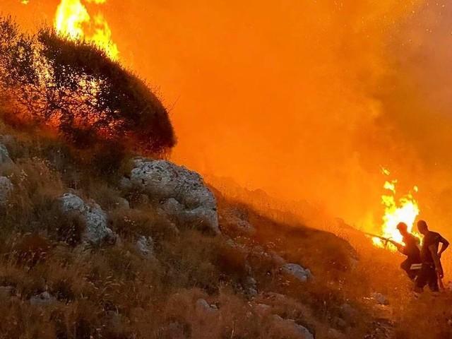 Waldbrände im Mittelmeerraum: Wie gefährdet sind Tiere und Pflanzen?