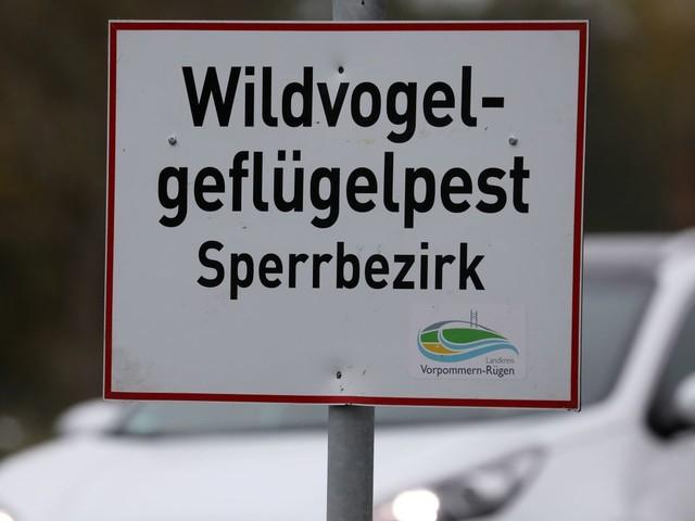 Vogelgrippe: Gefährliche Tierseuche breitet sich in Deutschland aus