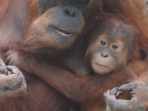 Hamburger Tierpark: Putzige Tierbabys bei Hagenbeck