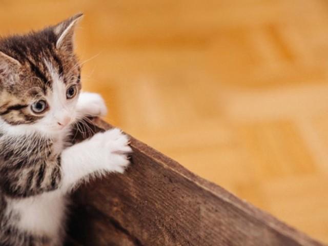 Was für ein Staubsaugerroboter bei Katzenhaaren geeignet ist