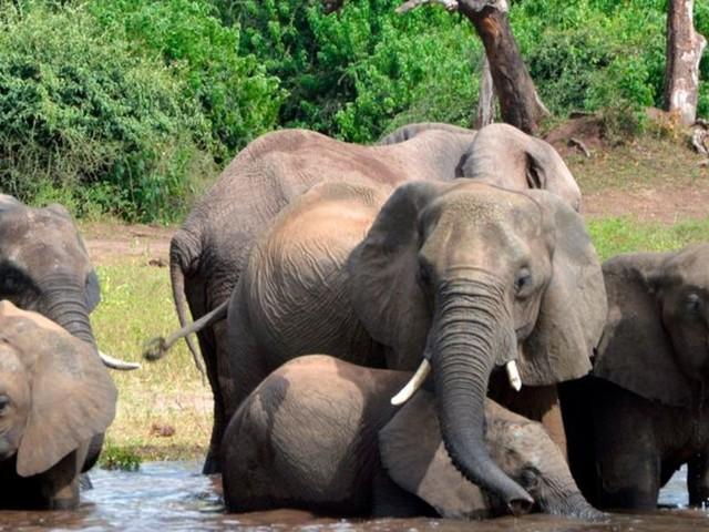 Okavango-Delta: Botsuana untersucht erneut mysteriöses Elefantensterben