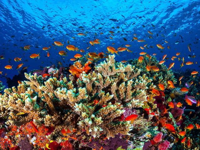 Australien: Einstufung des Great Barrier Reef als gefährdetes Welterbe vorerst verhindert