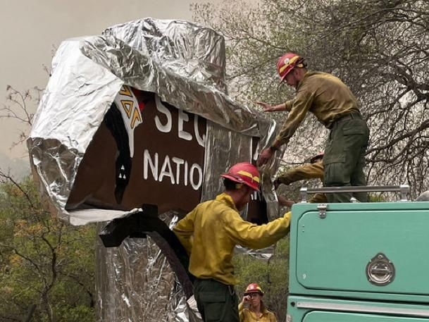 Alufolie soll Kaliforniens Mammutbäume vor Waldbrand schützen