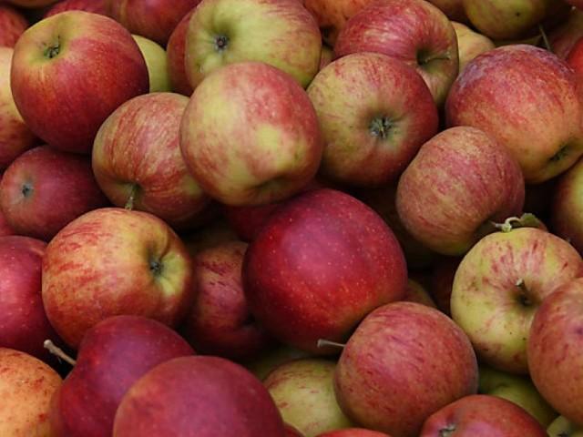 Frostbedingt um ein Drittel weniger Ertrag bei steirischer Apfelernte