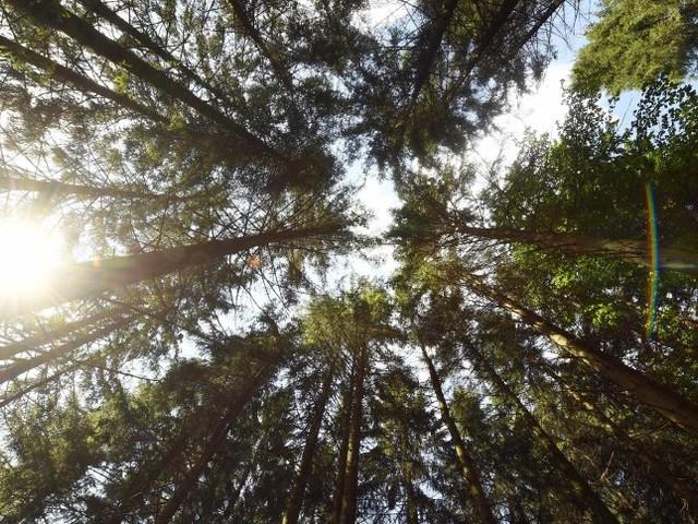 Borkenkäfer und Hitze: Ministerin Klöcknerverspricht Dürrehilfe auch für Waldbesitzer
