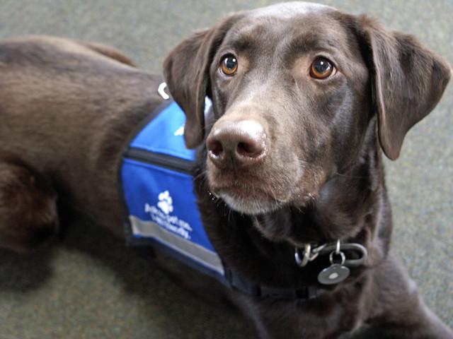 Weil ihr Hund schwarz ist: Blinde Frau soll den Bus wieder verlassen