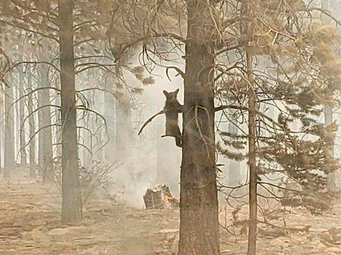 Brände in USA - USA: Paar nach Waldbrand wegen fahrlässiger Tötung angeklagt
