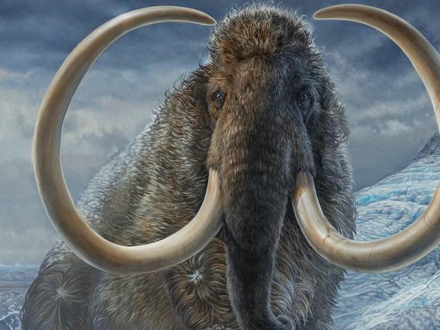 Geklonter Urzeit-Riese: US-Genforscher wollen bis 2027 Mammut erzeugen