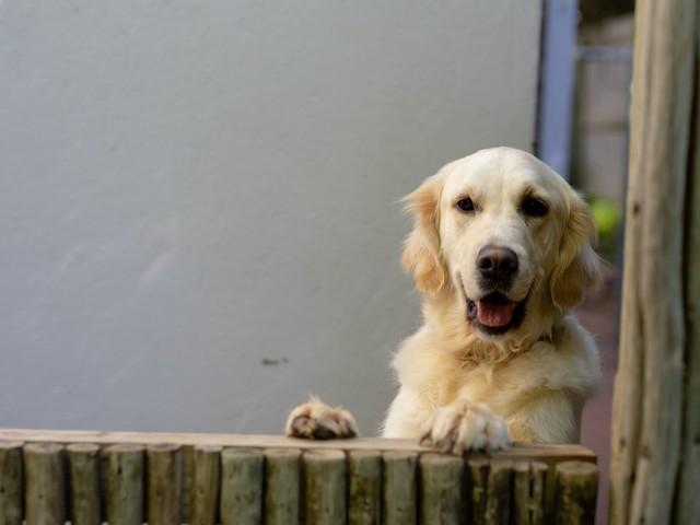 Hund auf Balkon wird zur Touristenattraktion in Danzig