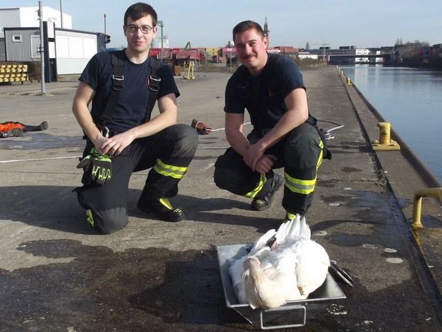 Tierische Rettung: Feuerwehr holt verletzten Schwan aus dem Wasser