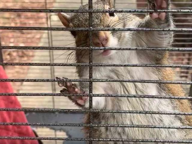 Es sollte zum Kampftier werden: Mann in den USA setzt Eichhörnchen auf Chrystal Meth