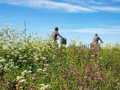 Die schönsten Orte für deinen Sommerurlaub in Friesland