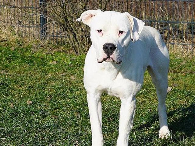"""In der Oberpfalz - Hund """"Hans Dampf"""" sucht dringend neuen Halter – ihm droht die Giftspritze"""