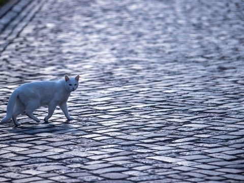 Tierrechte: Großbritannien verankert Gefühle von Wirbeltieren im Gesetz