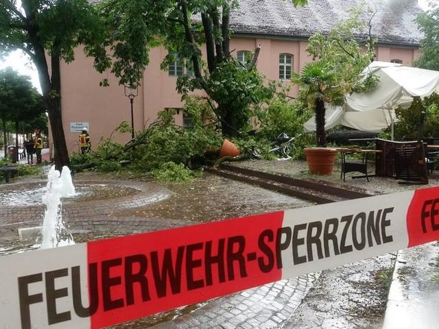 Unwetter: Baum bei schwerem Gewitter umgestürzt – vier Verletzte