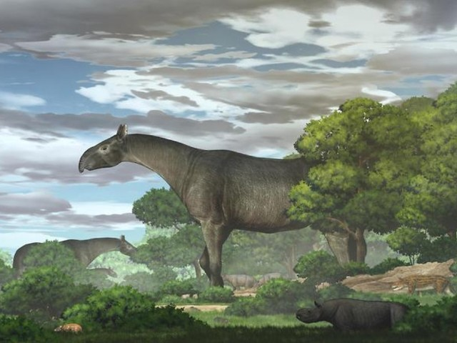 Acht Meter langer Gigant: Überreste von Riesennashorn entdeckt