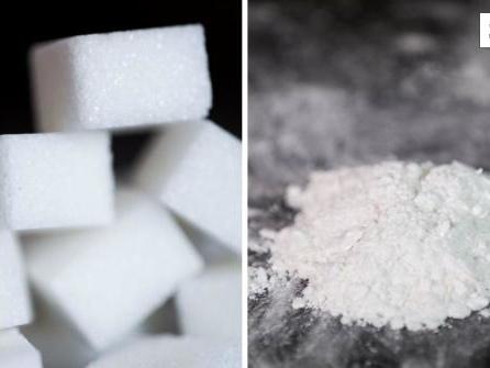 Kokain oder Zucker: Was macht abhängiger?