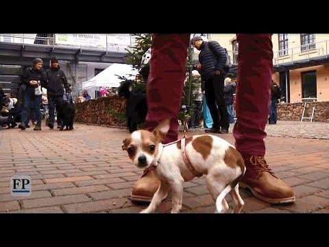 Erster Weihnachtsmarkt für Hunde in Chemnitz