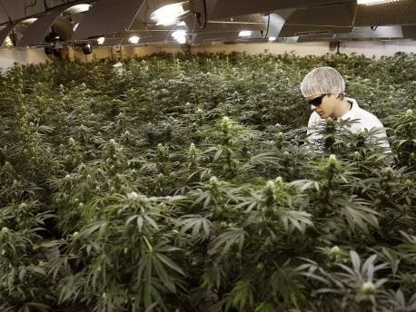Kanada im Cannabis-Rausch