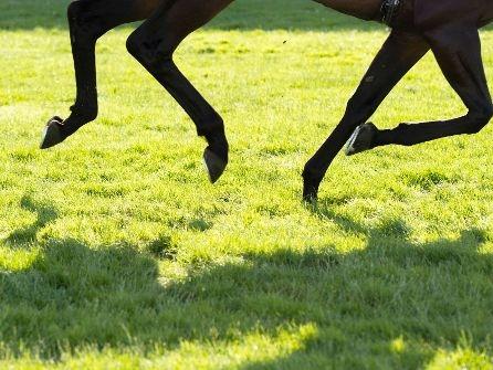 Brandenburg: Dreijährige fällt von scheuendem Pferd und stirbt