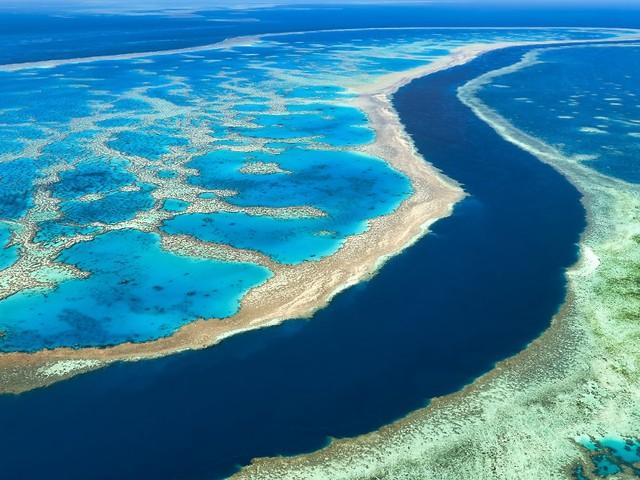 Great Barrier Reef bedroht: Australien kämpft um Welterbestatus des Riffs