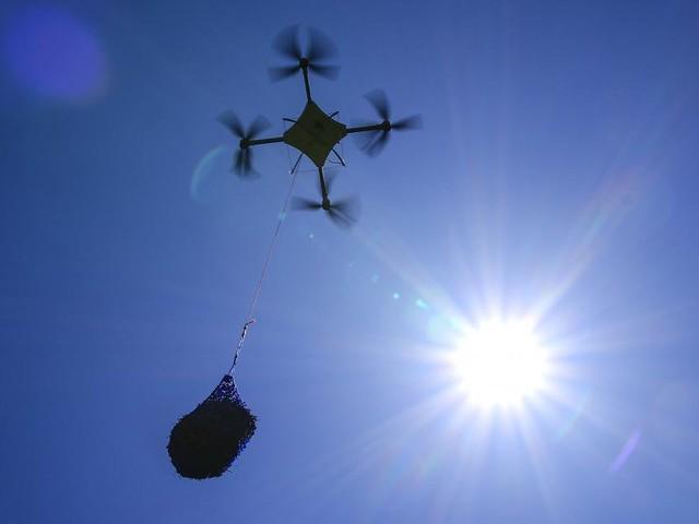 Kommt ein Wäldchen geflogen: Bundesforste testen Drohnen für Aufforstung