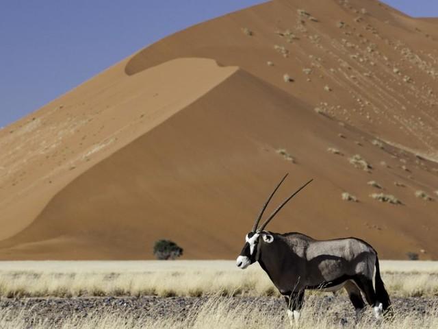 Der Traum von einer Safari in Afrika: Fünf großartige Ziele