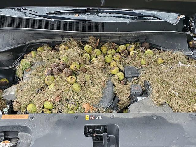 Frau bemerkt komischen Geruch im Auto und entdeckt geheimes Versteck im Motorraum