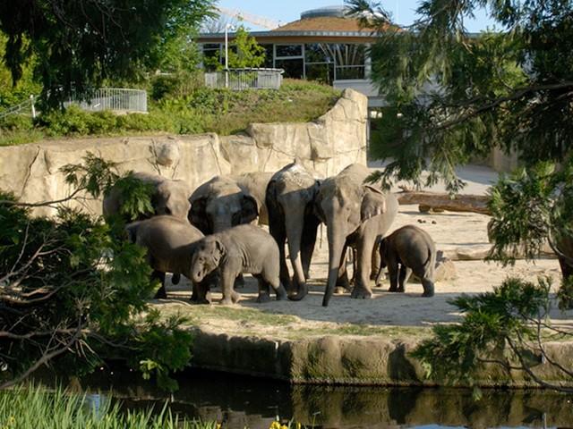 Zoo Köln – Eintrittskarten zum Sparpreis mit 44% Rabatt
